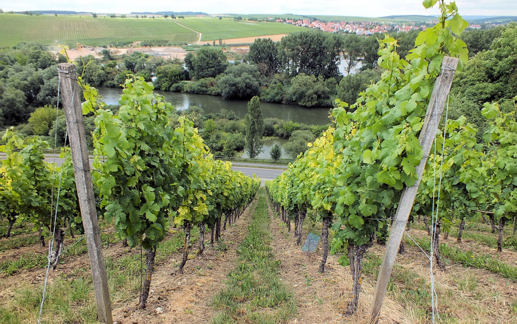 Blick vom Weinberg auf die Mainschleife - irgendwo vor Schloss Hallburg