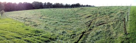 Rasen schön kurz, nur der Grünschnitt ist noch drauf.