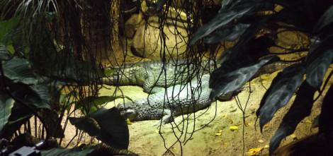 Reptilien gab's im Aquarium auch zu bestaunen.