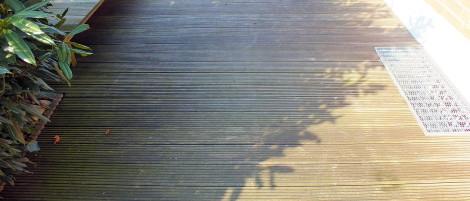 Moos unter dem Kirschlorbeer