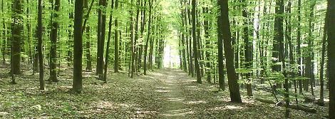 Forst auf der Ebenöde in der Nähe des Rütli